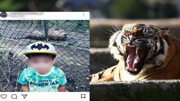 Włożyli dziecko do wybiegu dla tygrysów i zrobili zdjęcie