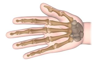Kości ręki - jak zbudowana jest nasza ręka i jakie funkcje pełnią jej poszczególne części?