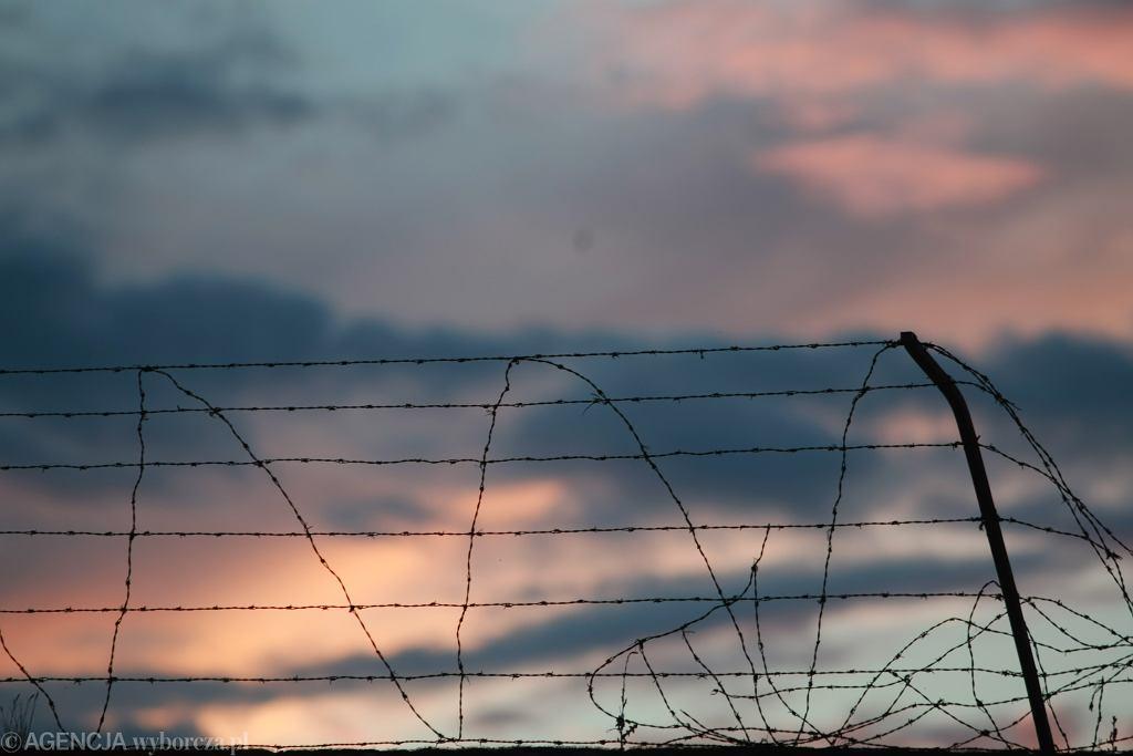Drut kolczasty (zdjęcie ilustracyjne)