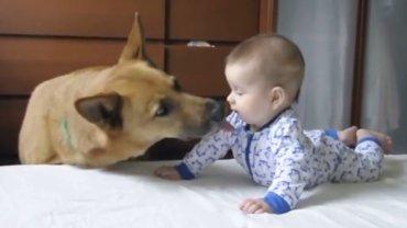 Pies całuje dziecko