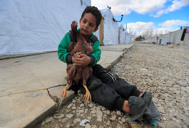 A displaced Syrian boy holds a chicken, as he sits outside his family