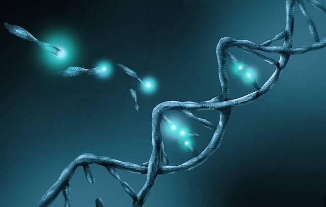 O rozwoju progerii decyduje mutacja genetyczna w obrębie tylko jednego nukleotydu budującego łańcuch DNA
