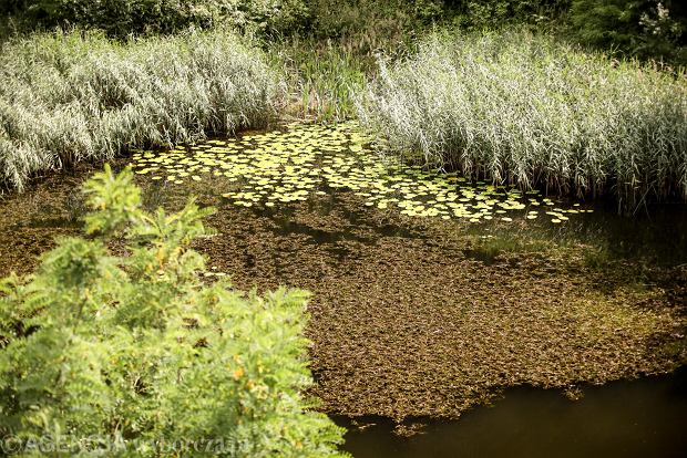 Zdjęcie numer 4 w galerii - Woda znów płynie po skałach Kadzielni, uruchomiono wodospad [ZDJĘCIA]