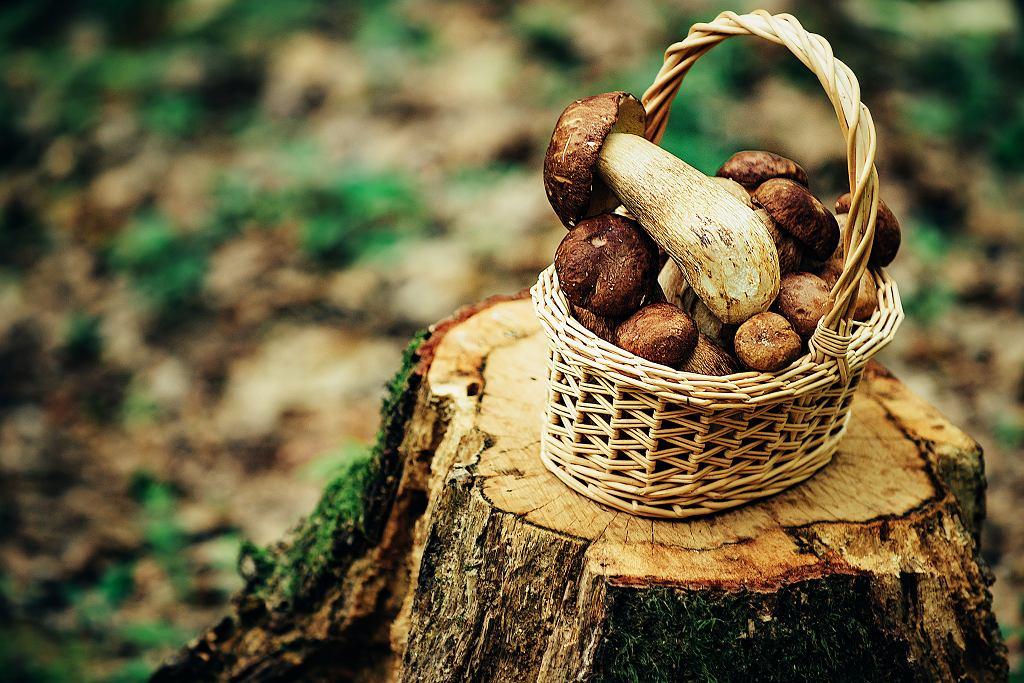 Koszyk z grzybami