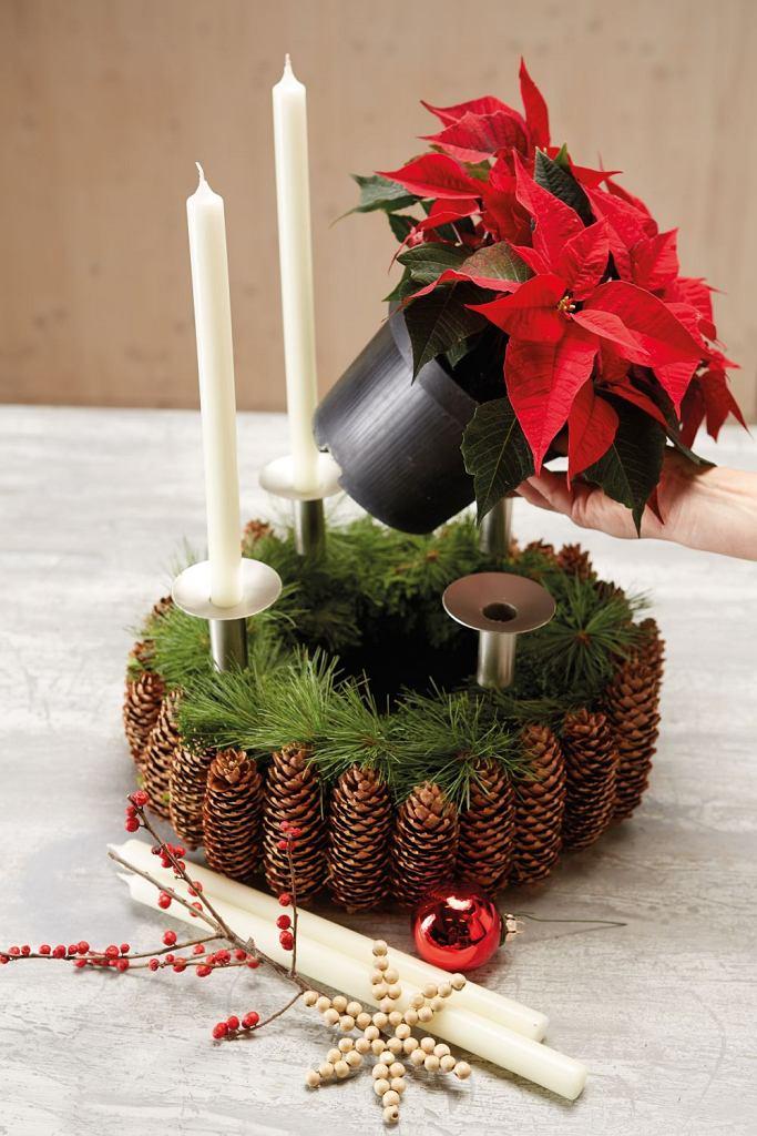 Wieniec bożonarodzeniowy z szyszek
