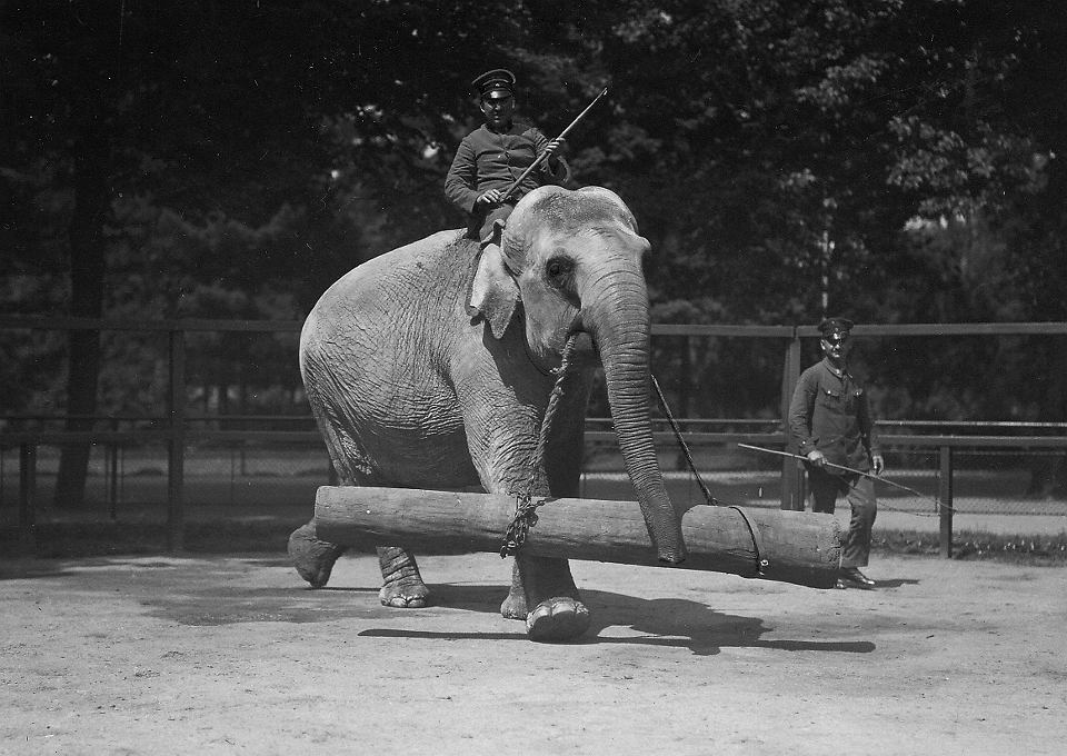 Słonie, 1930 r.