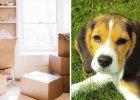Jak zminimalizować stres zwierzęcia w czasie przeprowadzki?