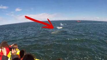 Wieloryb podpływa do łodzi