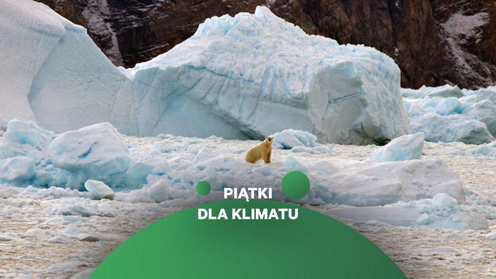 Topniejące lodowce na Grenlandii