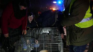 Wilk Miko został uratowany