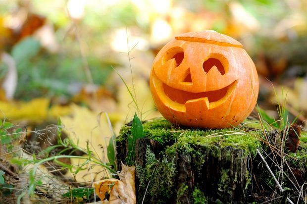 Dynia na Halloween. Zdjęcie ilustracyjne