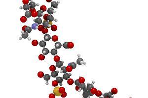 Proteoglikany - czym są, jakie mają zastosowanie?