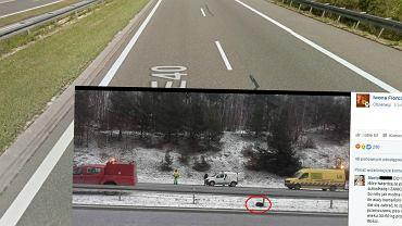 Autostrada A4 i ranny pies