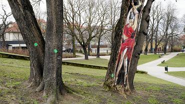 Drzewa w parku Wieniawskiego