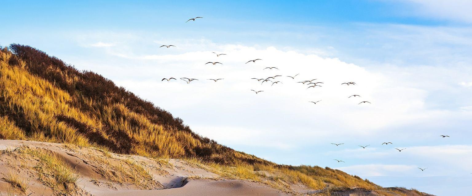 Masz dość tłoku w europejskich kurortach? Wybierz nieziemsko piękne plaże Danii
