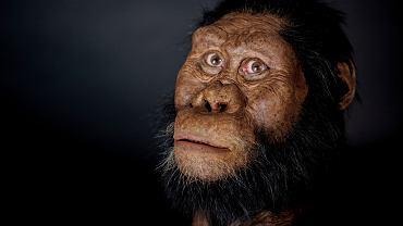 Przodek Lucy - Australopithecus anamensis