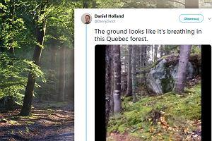 Tak oddycha las? Brytyjczyk nagrał niecodzienne zjawisko. Eksperci wyjaśniają, jak to możliwe