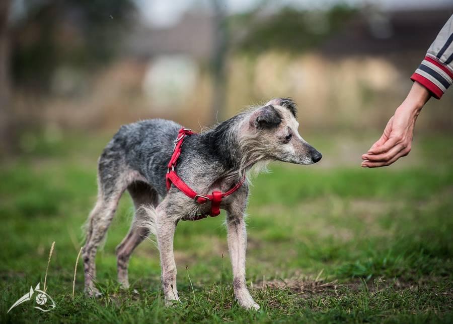 Beza jest pod opieką warszawskiej Fundacji Zwierzęca Polana