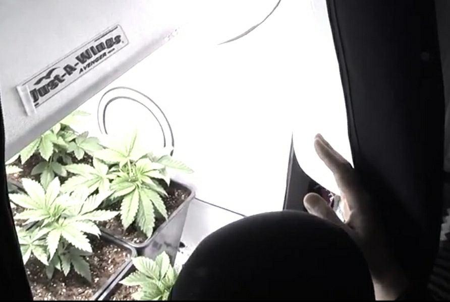 Hodowla marihuany w domu starców