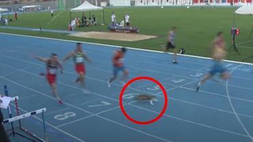 Kot wbiegł na bieżnię podczas wyścigu na 100 metrów