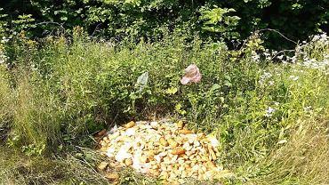 Góra serów wyrzucona do lasów w Bieszczadach