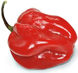 Papryczki chili: kuchnia ostra jak diabli, kuchnia, kuchnie świata, Habanero