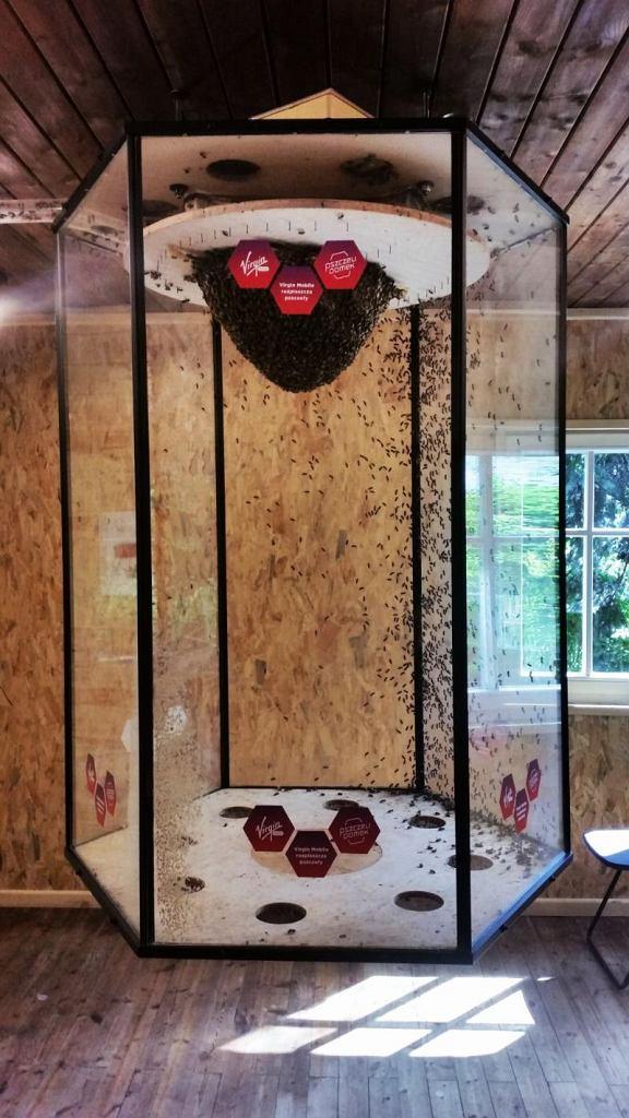 Pszczeli dom na Jazdowie