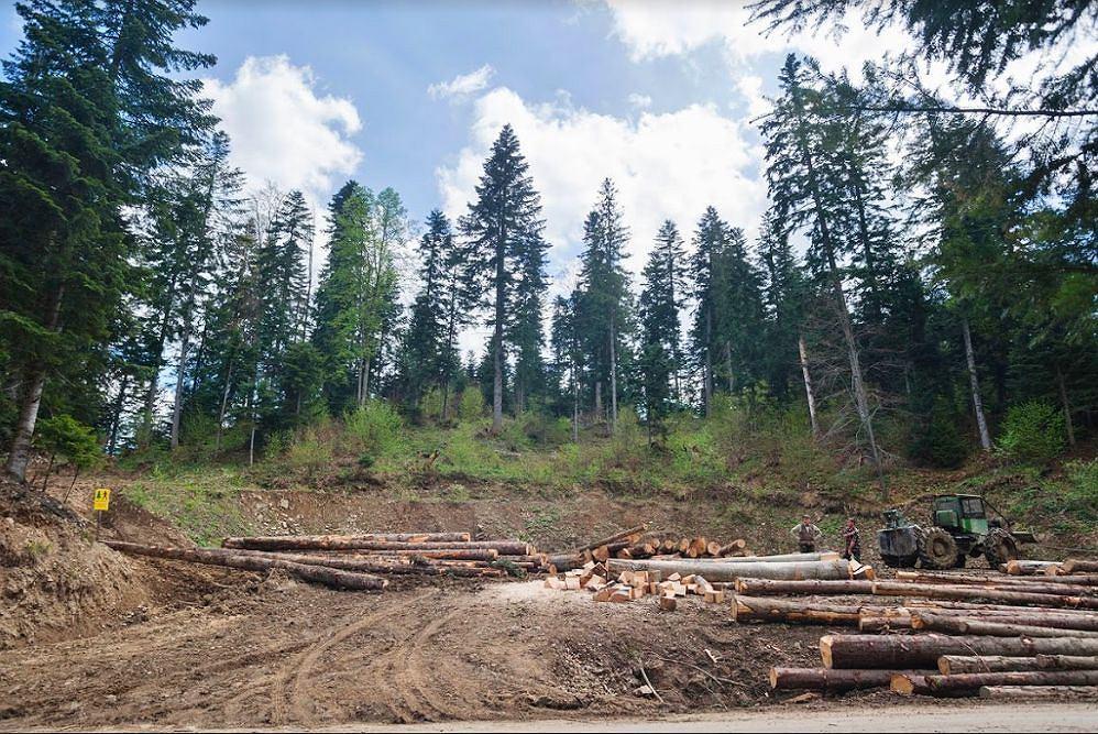 Aktywiści bronią projektowanego Turnickiego Parku Narodowego. Inicjatywa Dzikie Karpaty zbiera pieniądze na blokadę wycinki
