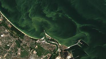 Gdańsk, Bałtyk, 27 lipca. Widok na morze z sinicami z satelity