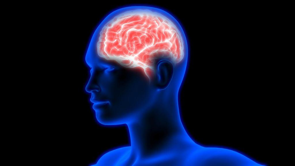 Oponiak jest (najczęściej) łagodnym nowotworem mózgu.