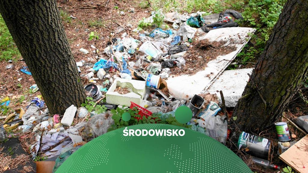 Śmieci w lesie, zdjęcie ilustracyjne