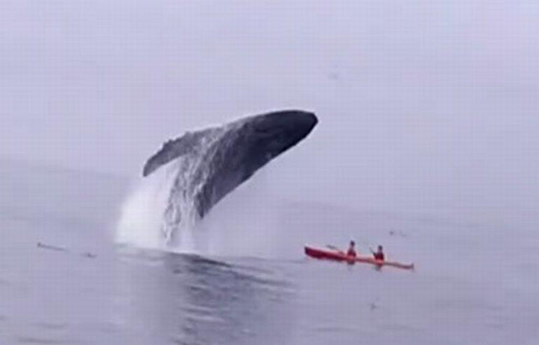 Wieloryb i kajak