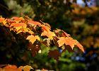 Równonoc jesienna już dziś. Rozpoczęła się astronomiczna i kalendarzowa jesień