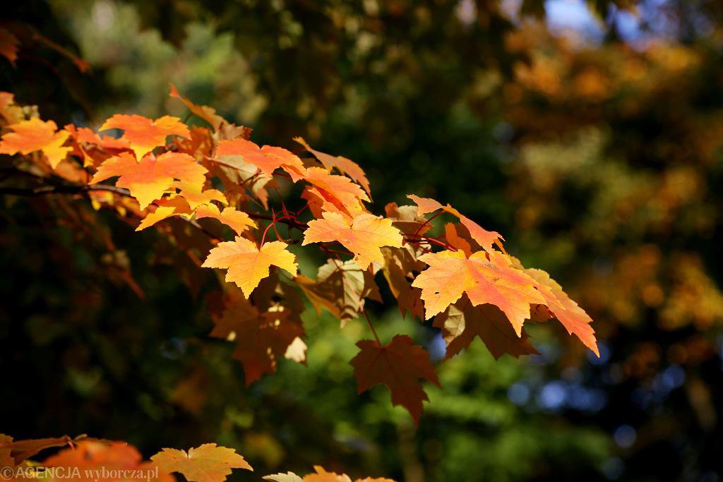 Równonoc jesienna. Rozpoczęła się astronomiczna i kalendarzowa jesień