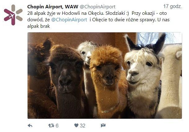 Alpaki z Okęcia