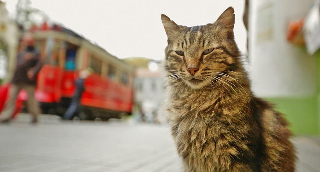 'Kedi - sekretne życie kotów'