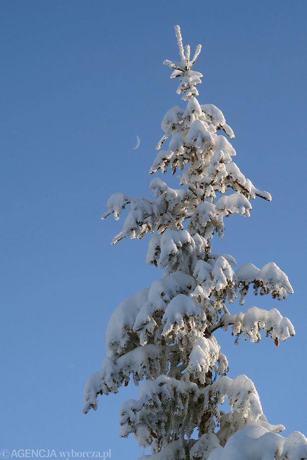 Zdjęcie numer 52 w galerii - Słońce, śnieg i szczyty. Piękna pogoda w Tatrach, zachwycające widoki