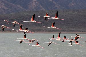 Kenia wycieczka - jeziora i parki narodowe w Kenii. Top 10