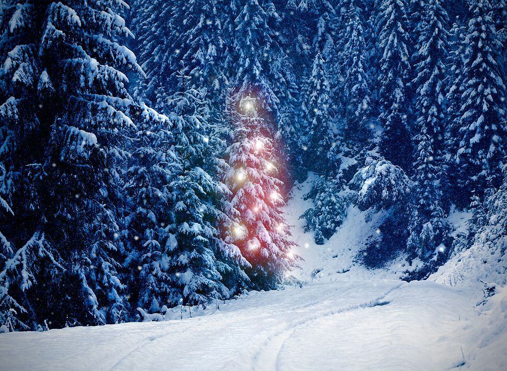 Od niedawna Estończycy mogą wybierać drzewko świąteczne poprzez aplikację mobilną i od razu zapłacić za nie SMS-em.