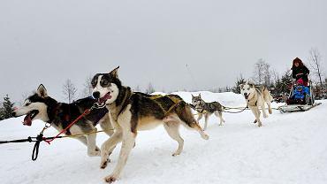 Śnieżne psy