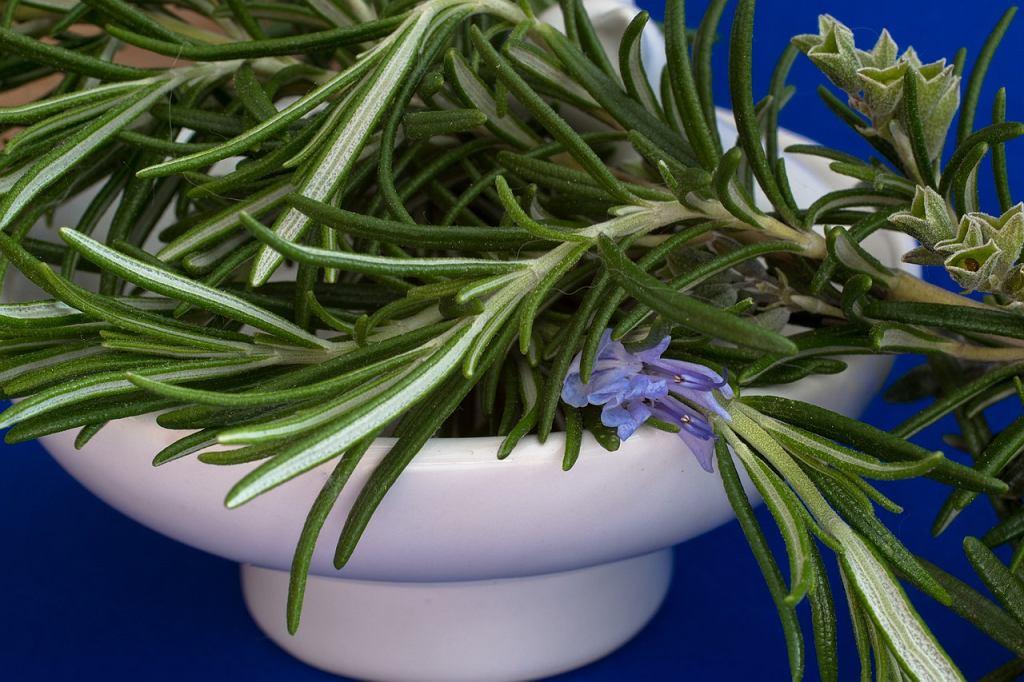 Popularna roślina doniczkowa i przyprawa według brytyjskich naukowców poprawia zapamiętywanie