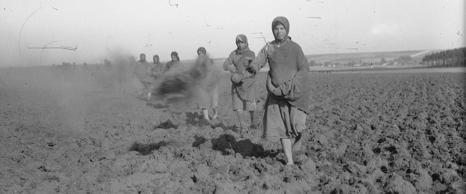 Narcyz Witczak-Witaczyński, 'Rolnictwo i hodowla w majątku ziemskim' (fot. Narodowe Archiwum Cyfrowe)