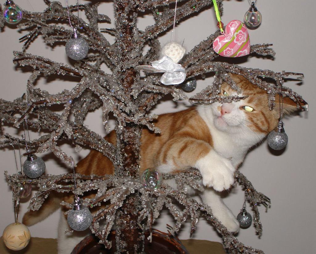 święta Bożego Natrodzenia Choinka I Kot Jak To Pogodzić Poznaj 11