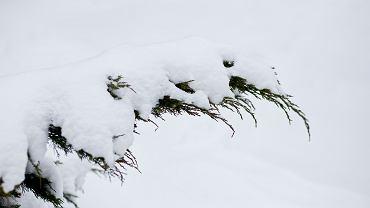śnieg (zdjęcie ilustracyjne)