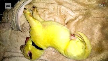 pies o zielono-żółtej sierści