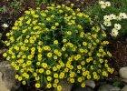 Kwiaty lubiące słońce. Które kwiaty najlepiej znoszą promienie słoneczne?