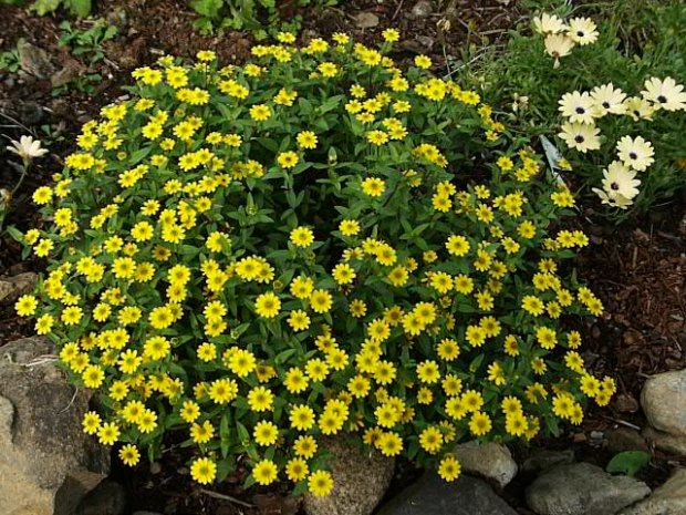 Kwiaty Na Balkon Słoneczny Zacieniony I Wietrzny