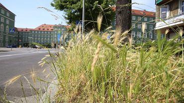 Szczecin dostosował się do apelu ekologów - trawy nie kosi
