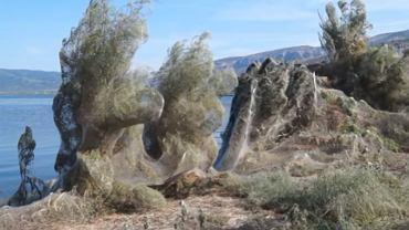 Greckie miasteczko pokryła wielka pajęczyna