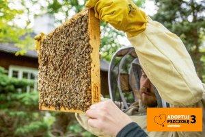 Pszczoła miodna ma dziś wielkie kłopoty
